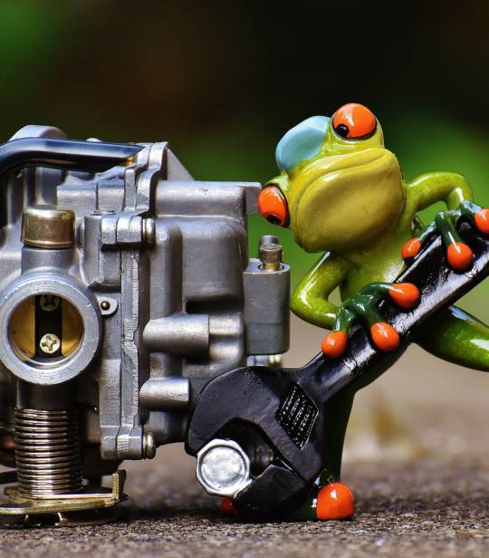 frog-1672974_1920.jpg